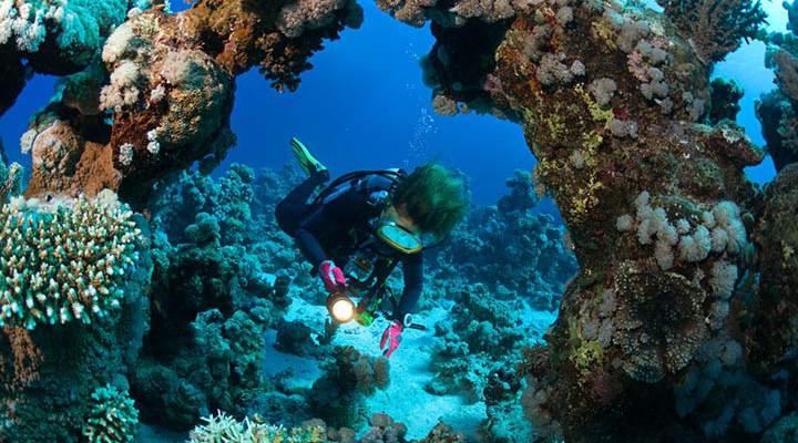 Baptême de plongée : le top 3 des clubs de plongée sur la Côte d'Azur